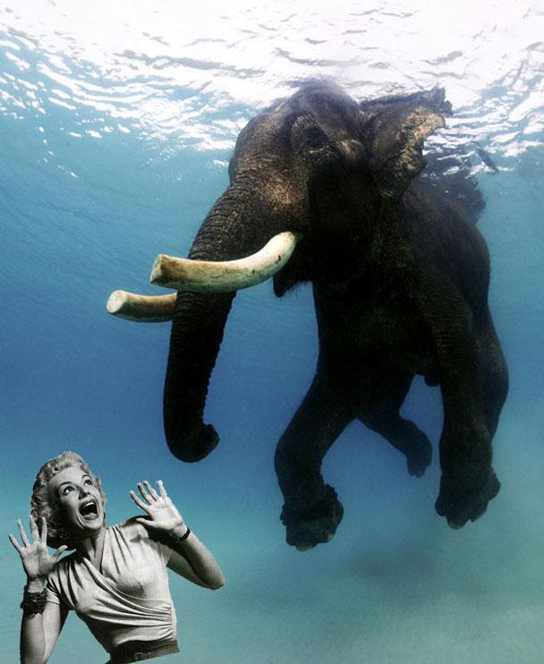 Scary Elephant